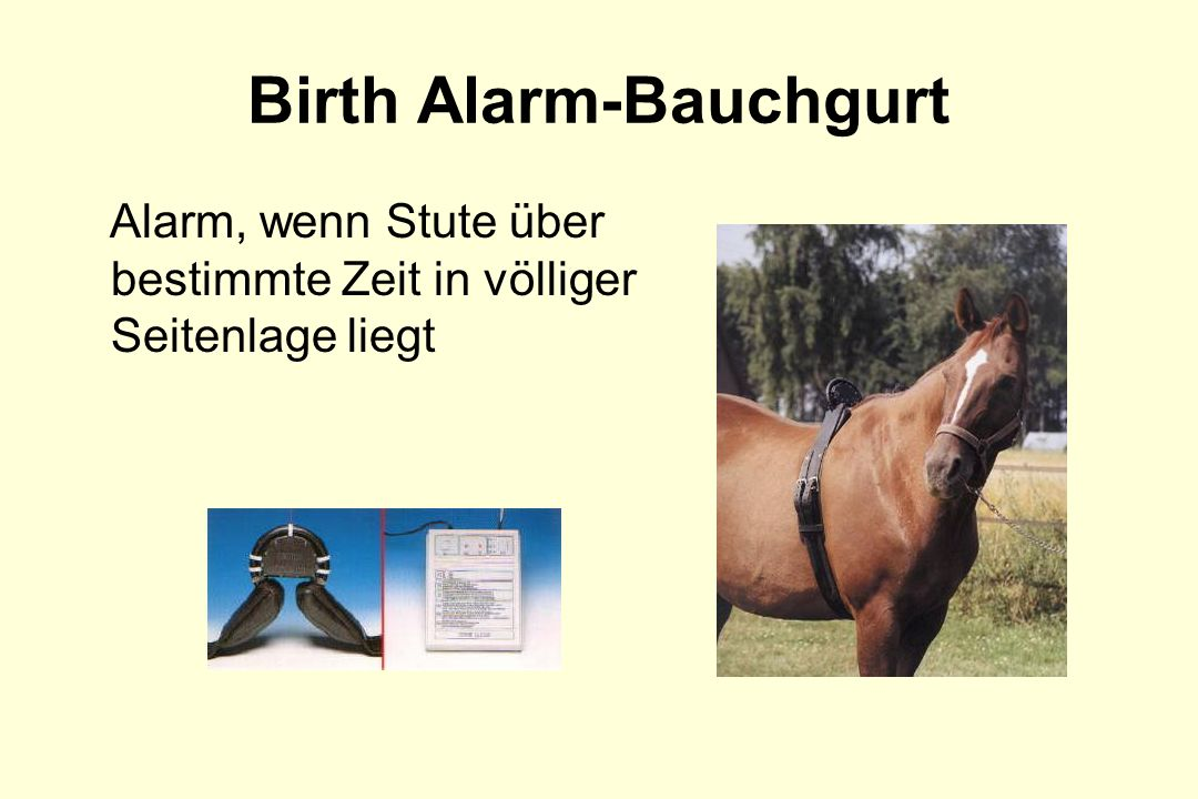 Birth Alarm-Bauchgurt