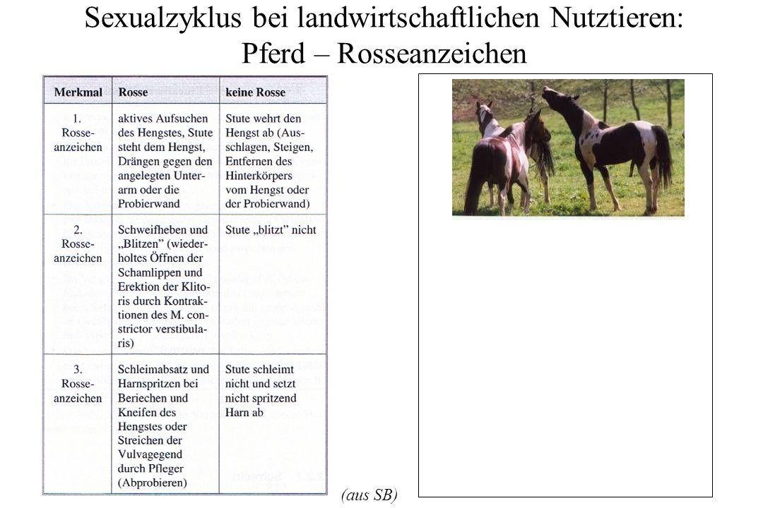Sexualzyklus bei landwirtschaftlichen Nutztieren: Pferd – Rosseanzeichen