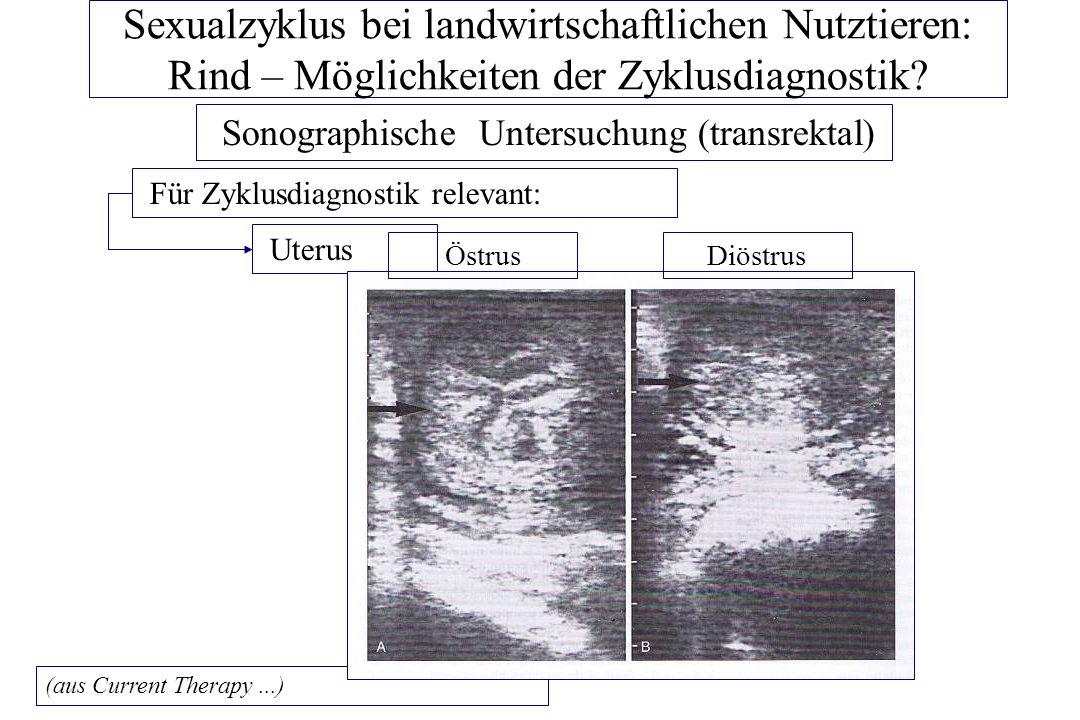Sonographische Untersuchung (transrektal)