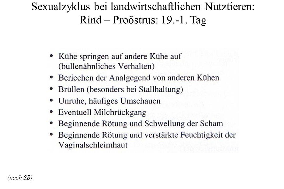 Sexualzyklus bei landwirtschaftlichen Nutztieren: Rind – Proöstrus: 19