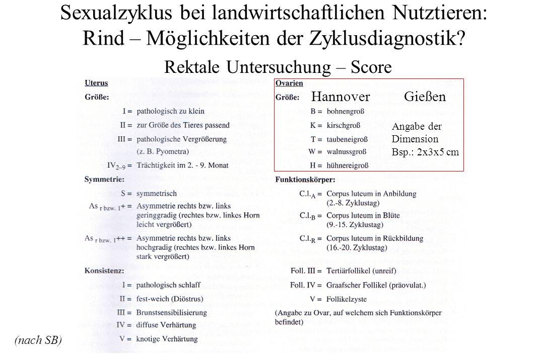 Rektale Untersuchung – Score