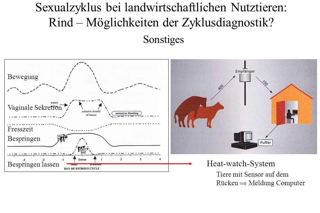 Sexualzyklus bei landwirtschaftlichen Nutztieren: Rind – Möglichkeiten der Zyklusdiagnostik