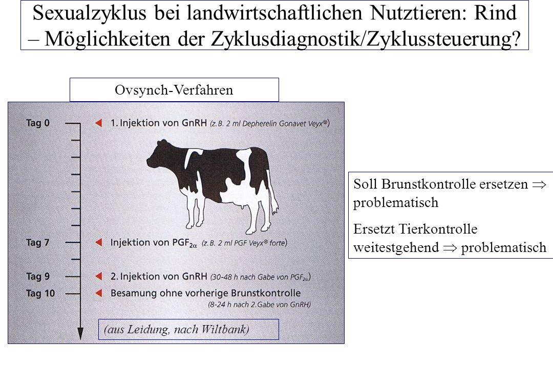 Sexualzyklus bei landwirtschaftlichen Nutztieren: Rind – Möglichkeiten der Zyklusdiagnostik/Zyklussteuerung