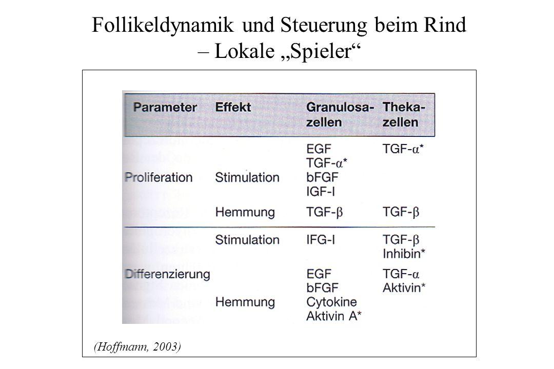 """Follikeldynamik und Steuerung beim Rind – Lokale """"Spieler"""