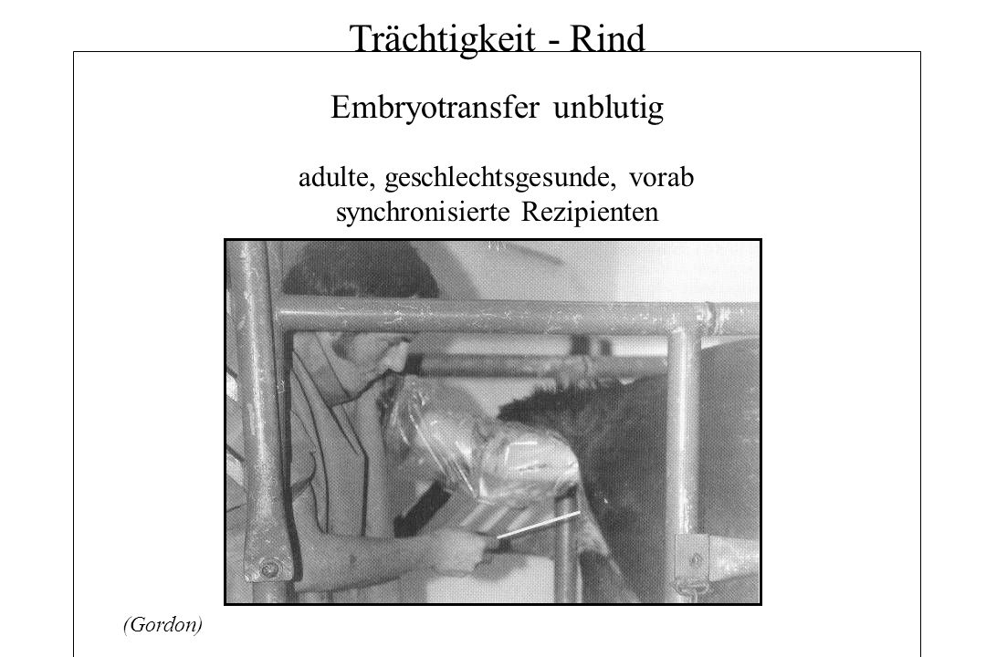 Trächtigkeit - Rind Embryotransfer unblutig