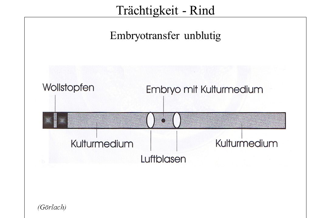 Embryotransfer unblutig