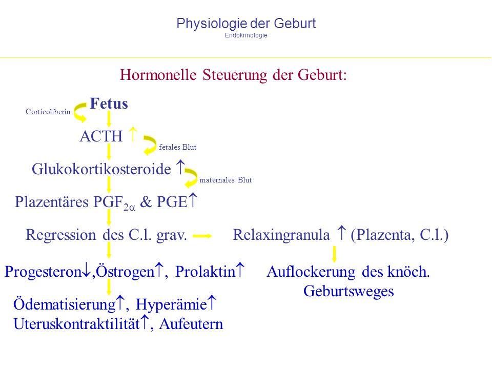 Physiologie der Geburt Endokrinologie