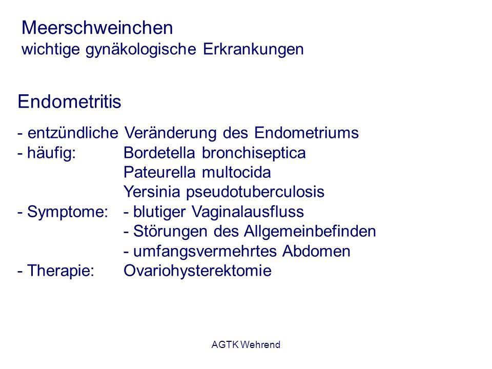 Meerschweinchen wichtige gynäkologische Erkrankungen