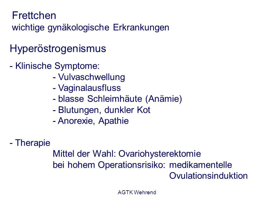 Frettchen wichtige gynäkologische Erkrankungen