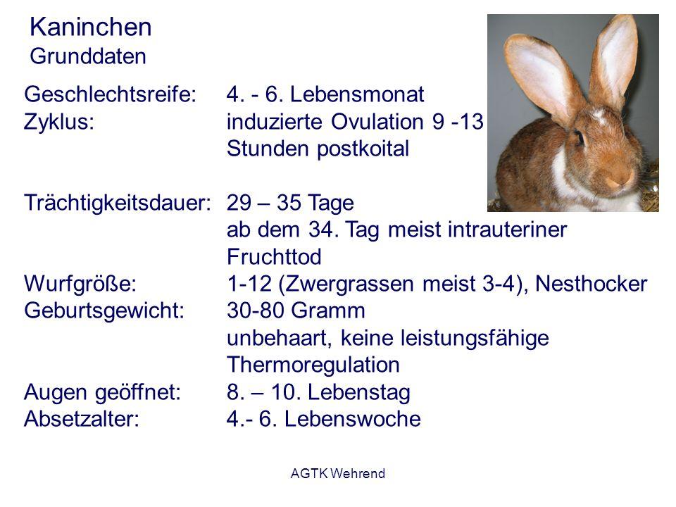 Kaninchen Grunddaten