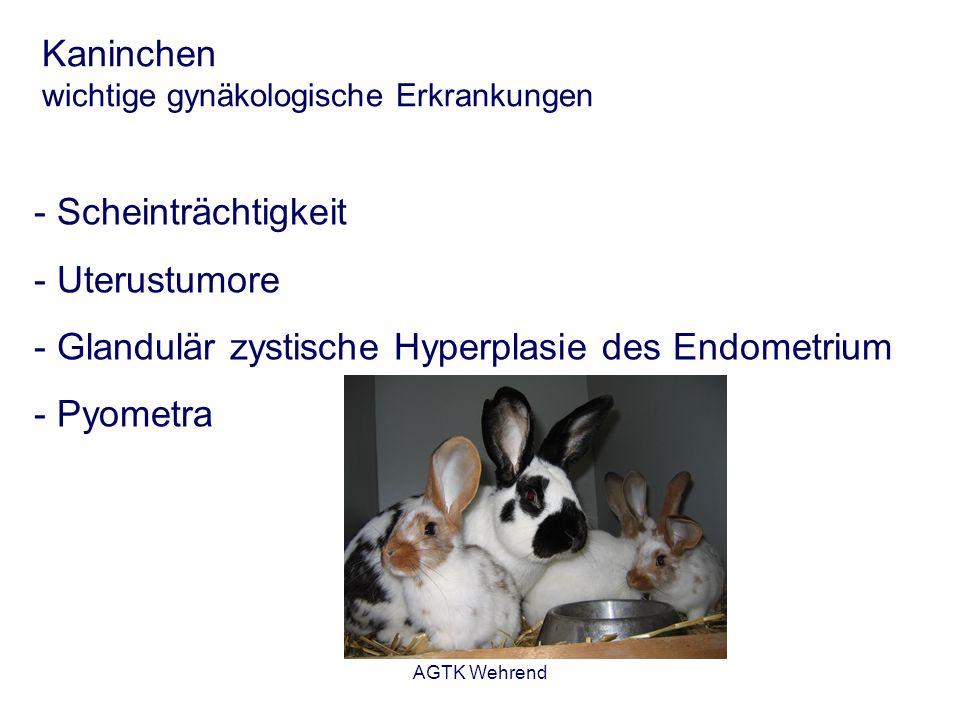 Kaninchen wichtige gynäkologische Erkrankungen
