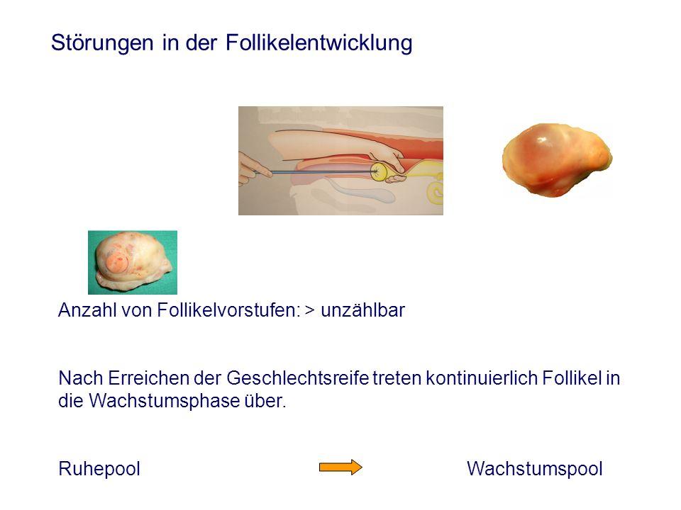Störungen in der Follikelentwicklung