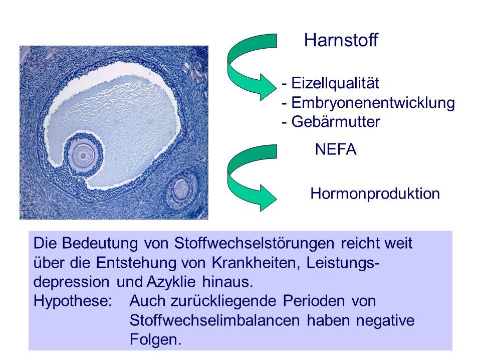 Harnstoff - Eizellqualität - Embryonenentwicklung - Gebärmutter NEFA