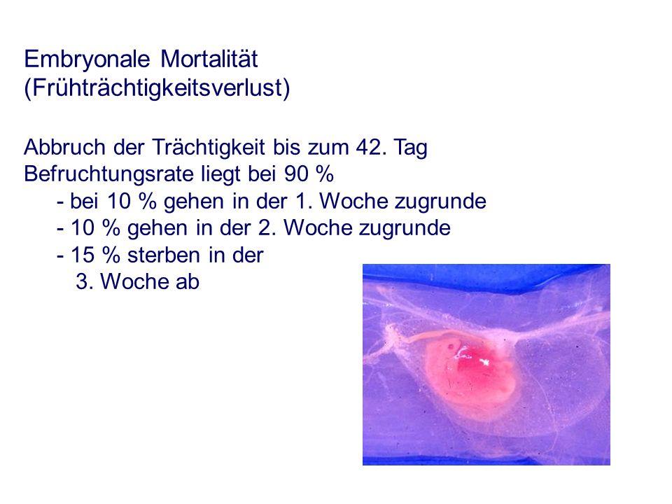 Embryonale Mortalität (Frühträchtigkeitsverlust) Abbruch der Trächtigkeit bis zum 42.