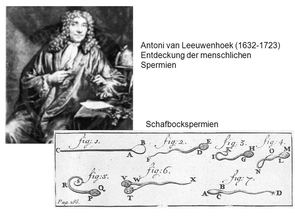 Antoni van Leeuwenhoek (1632-1723)