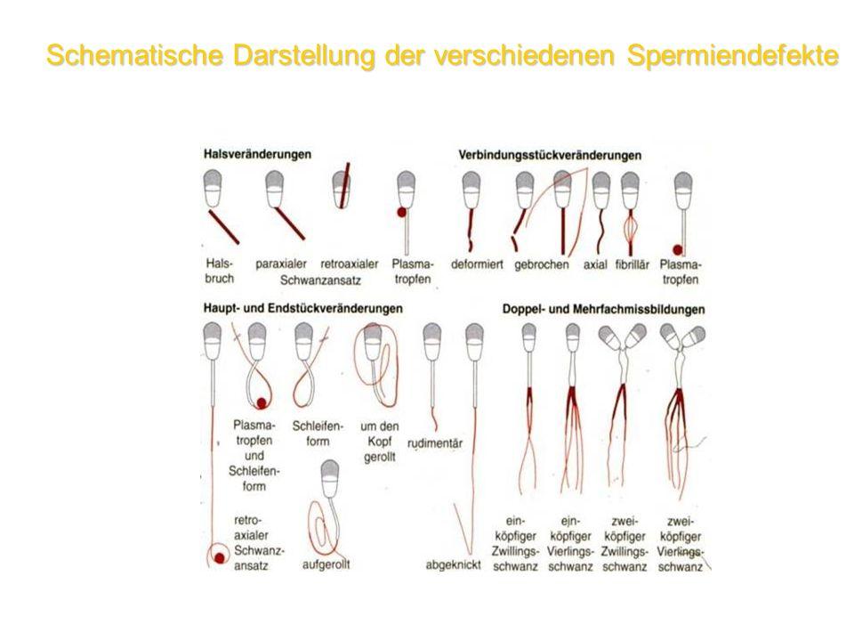 Schematische Darstellung der verschiedenen Spermiendefekte
