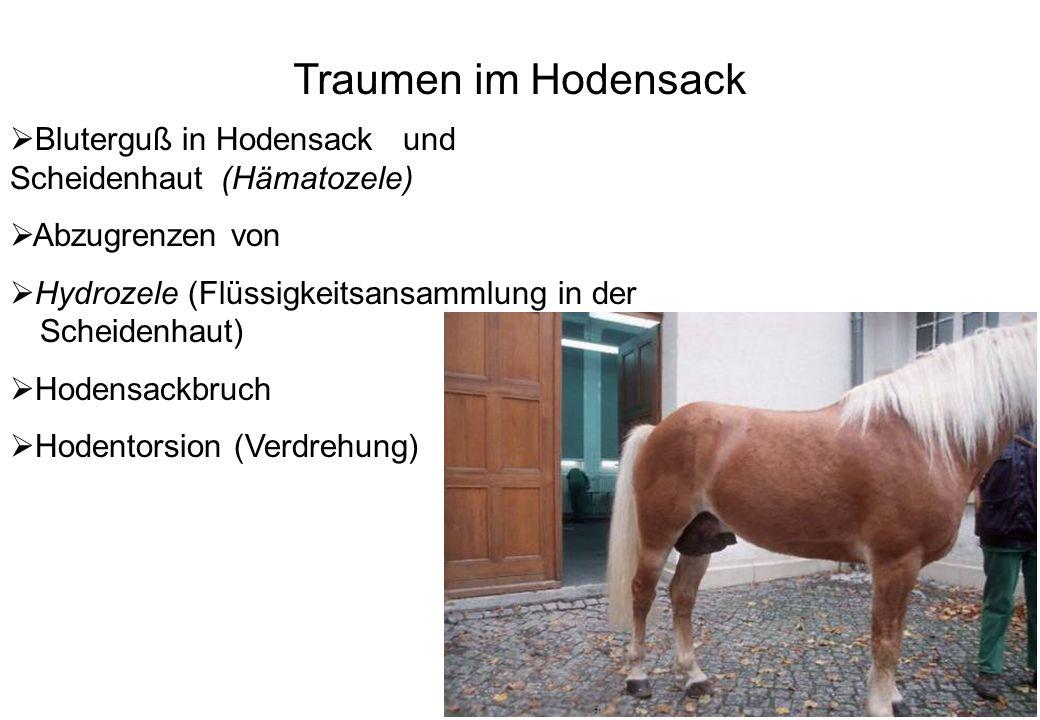 Traumen im Hodensack Bluterguß in Hodensack und Scheidenhaut (Hämatozele) Abzugrenzen von.