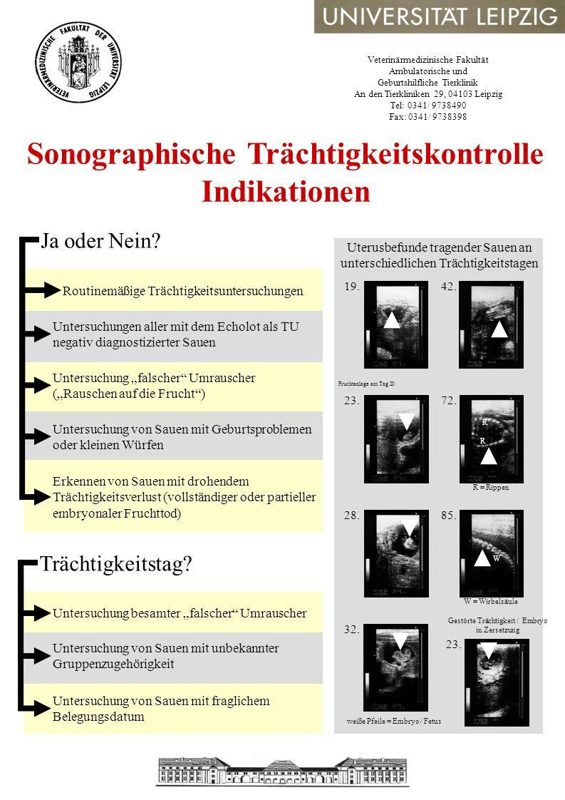 Sonographische Trächtigkeitskontrolle Indikationen