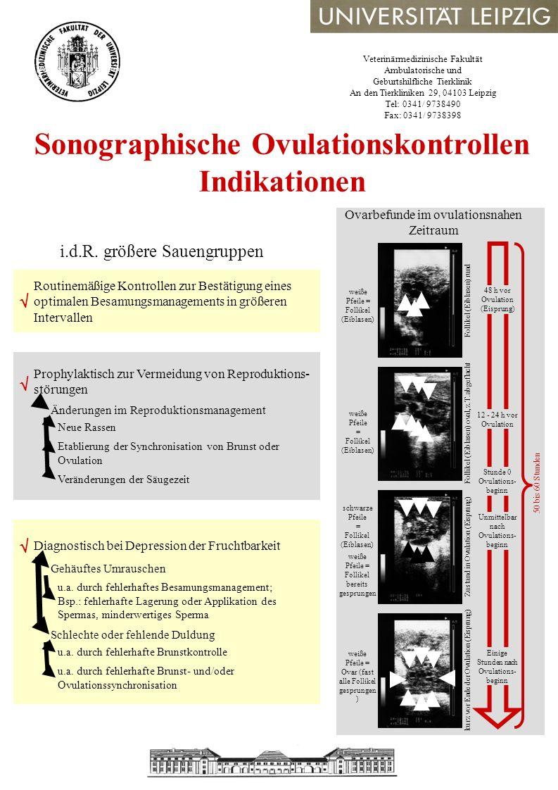 Sonographische Ovulationskontrollen Indikationen