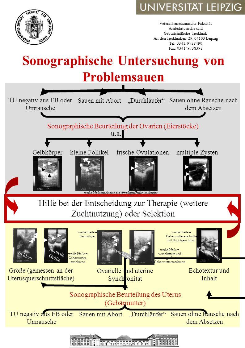 Sonographische Untersuchung von Problemsauen