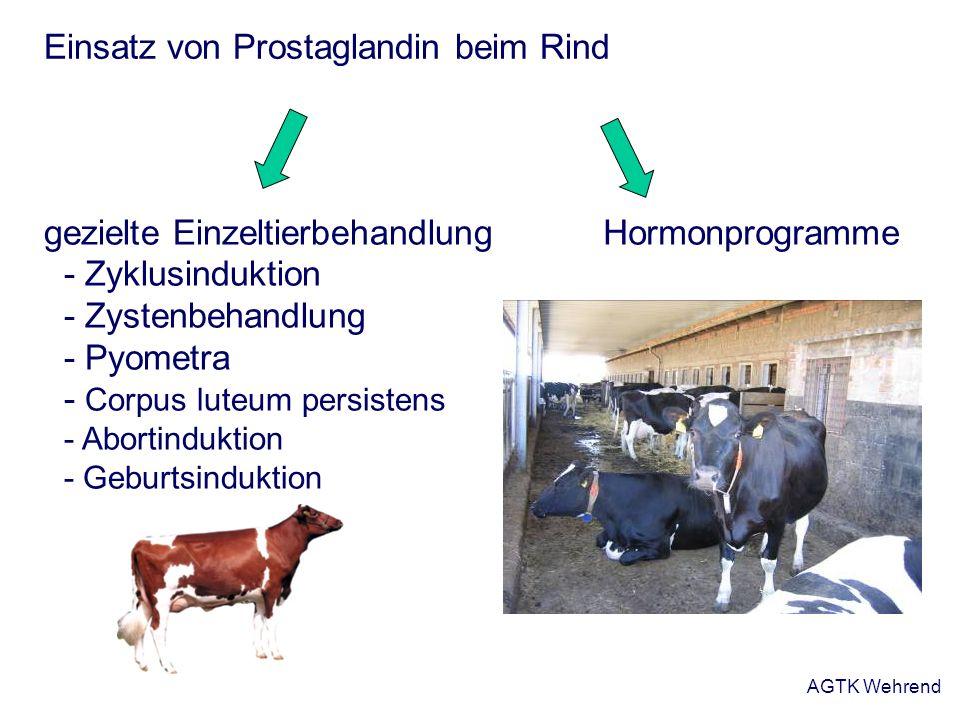 Einsatz von Prostaglandin beim Rind