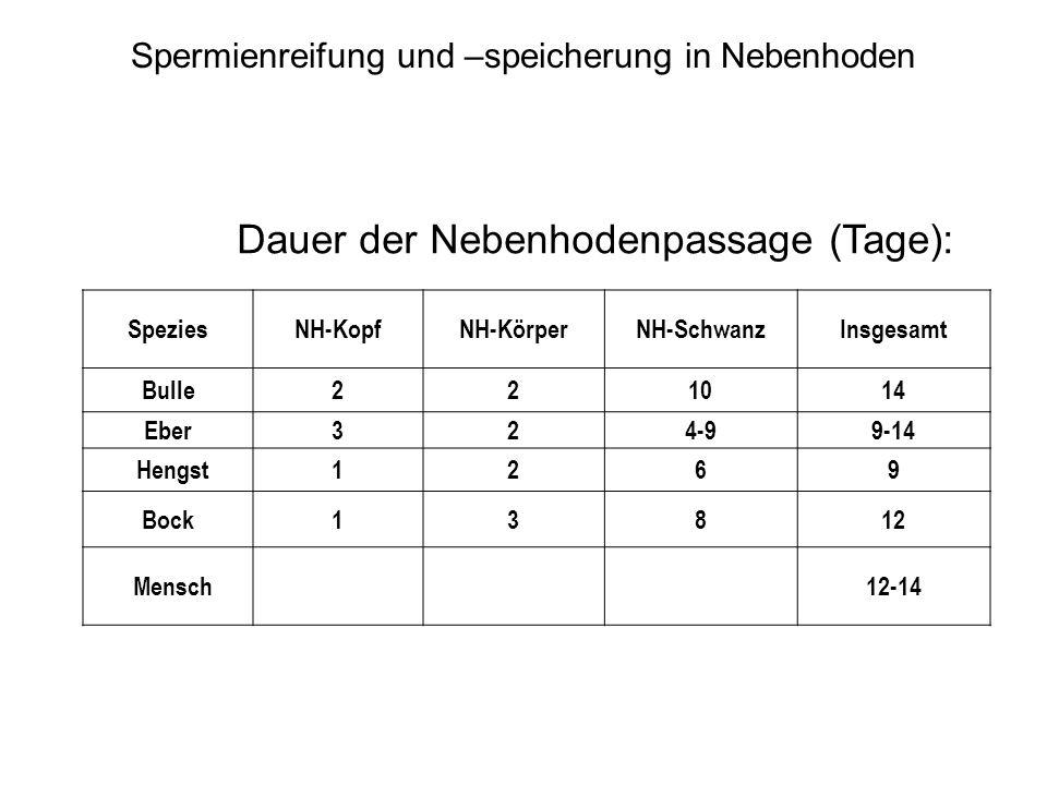 Dauer der Nebenhodenpassage (Tage):