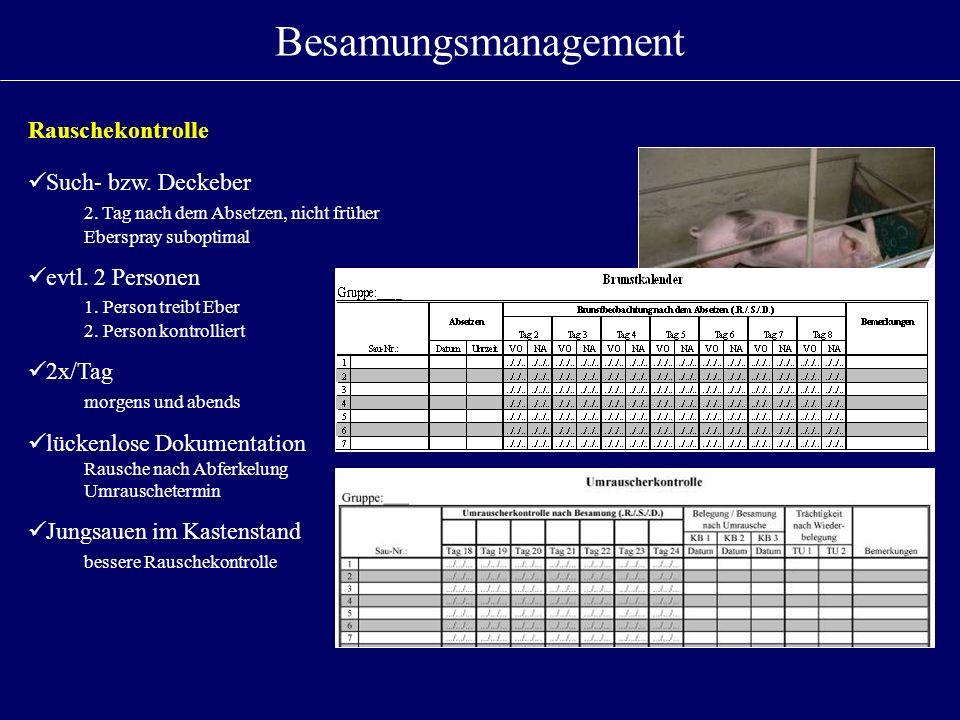 Besamungsmanagement Rauschekontrolle Such- bzw. Deckeber