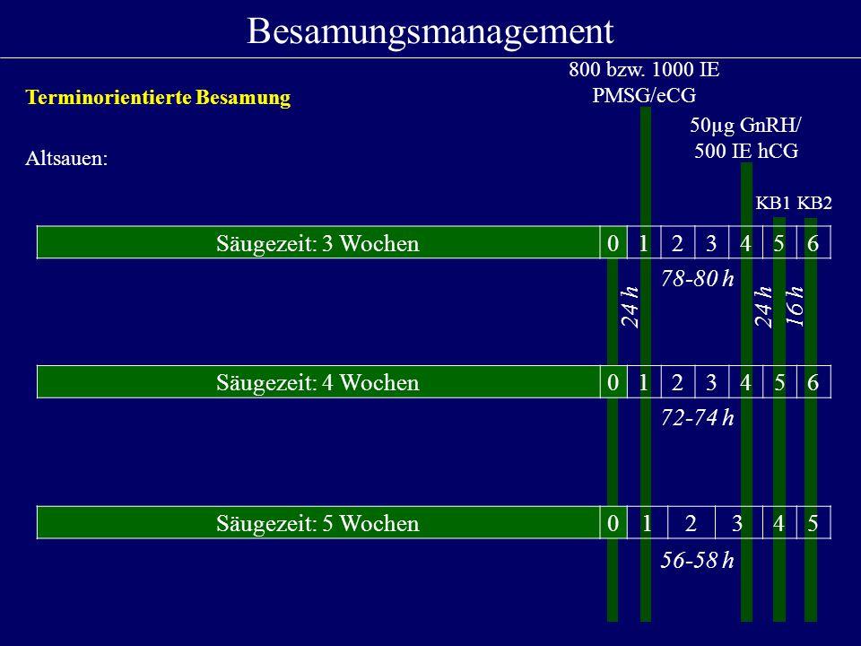Besamungsmanagement Säugezeit: 3 Wochen 1 2 3 4 5 6 78-80 h 24 h 24 h