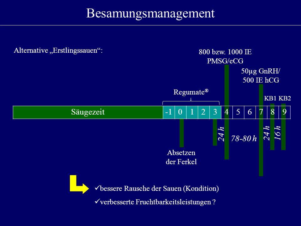 Besamungsmanagement Säugezeit -1 1 2 3 4 5 6 7 8 9 24 h 24 h 16 h