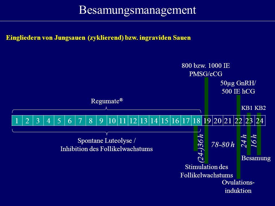 Besamungsmanagement Eingliedern von Jungsauen (zyklierend) bzw. ingraviden Sauen. 800 bzw. 1000 IE PMSG/eCG.