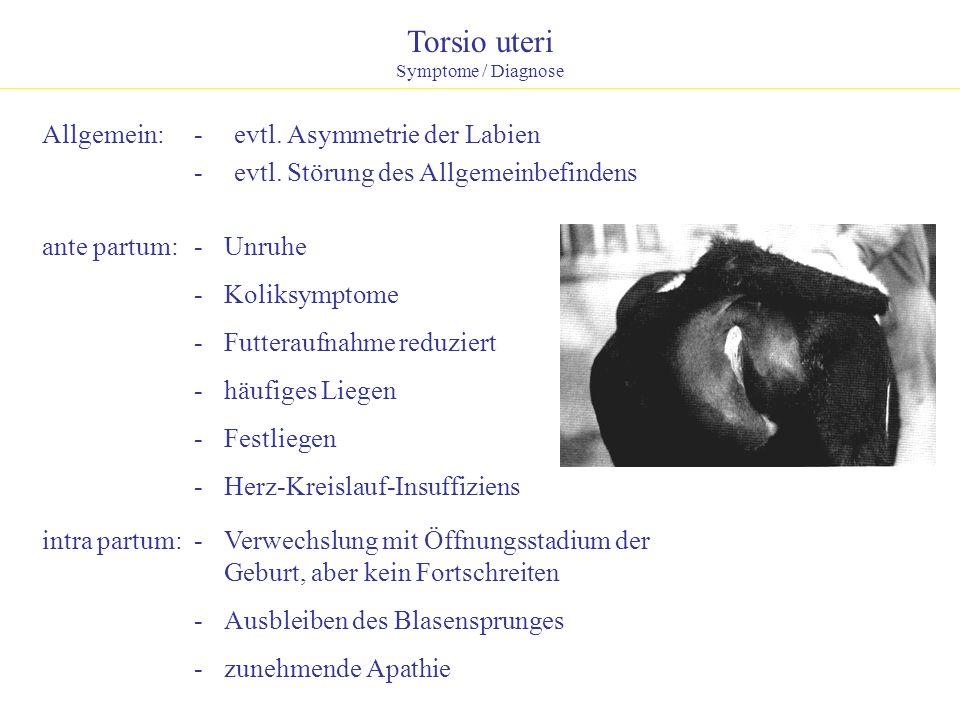 Torsio uteri Allgemein: - evtl. Asymmetrie der Labien