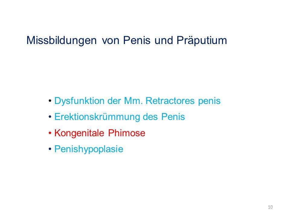 Missbildungen von Penis und Präputium