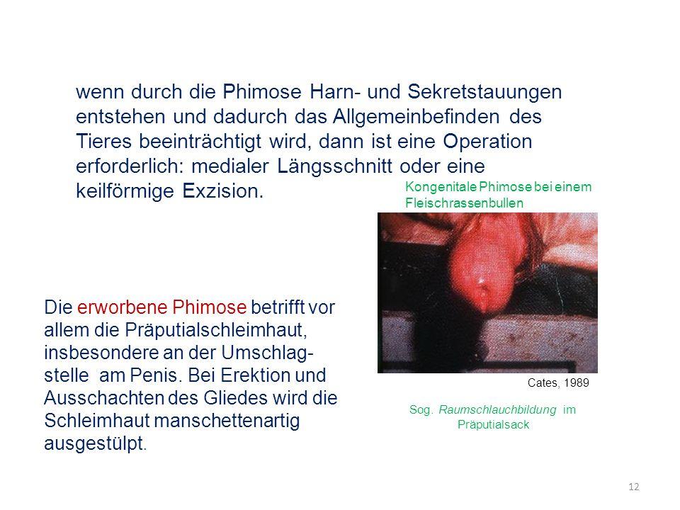 wenn durch die Phimose Harn- und Sekretstauungen entstehen und dadurch das Allgemeinbefinden des Tieres beeinträchtigt wird, dann ist eine Operation erforderlich: medialer Längsschnitt oder eine keilförmige Exzision.