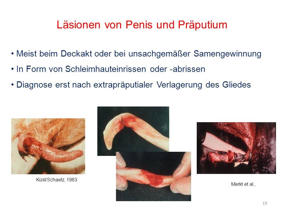 Läsionen von Penis und Präputium