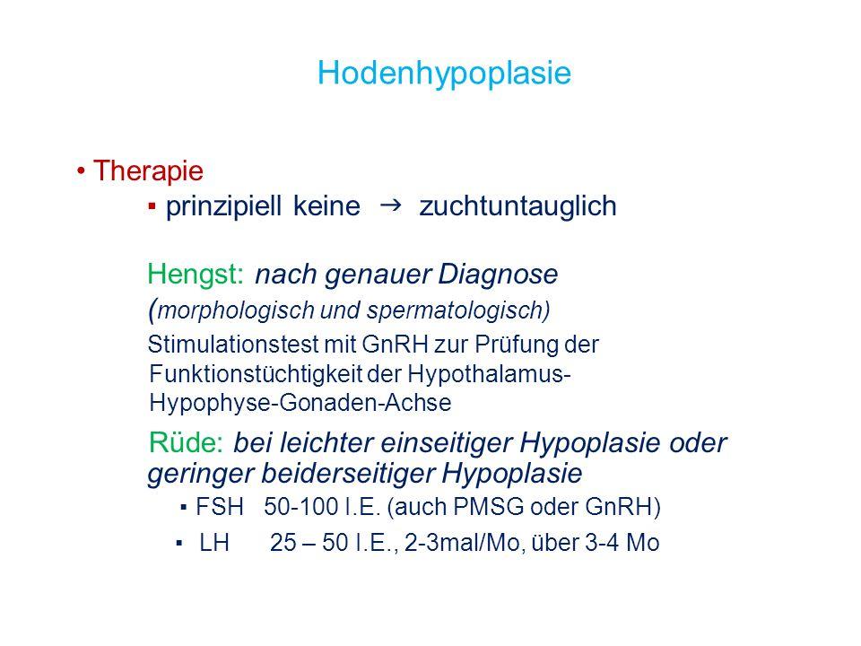 Hodenhypoplasie Therapie ▪ prinzipiell keine  zuchtuntauglich