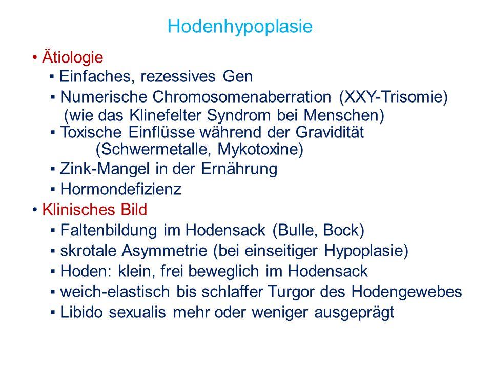 Hodenhypoplasie Ätiologie