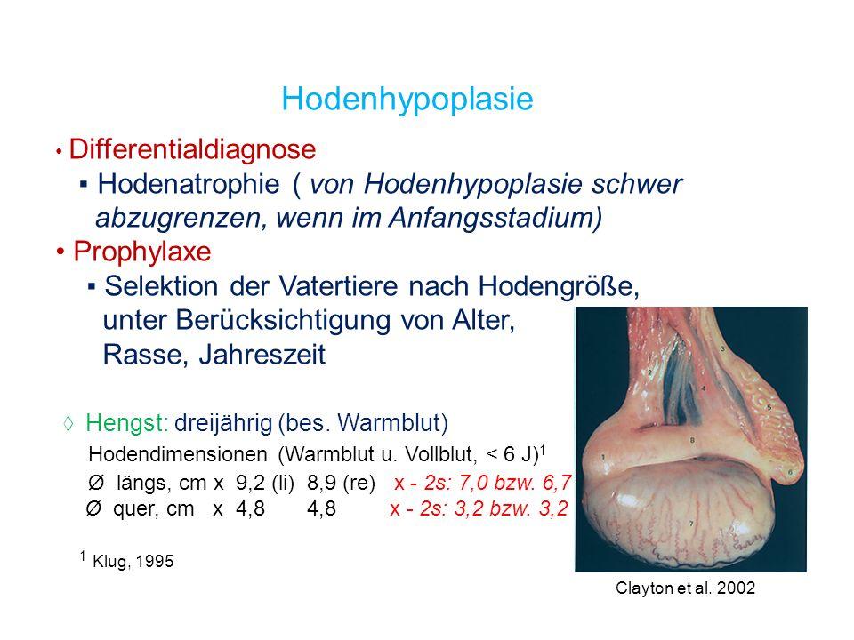 Hodenhypoplasie ▪ Hodenatrophie ( von Hodenhypoplasie schwer