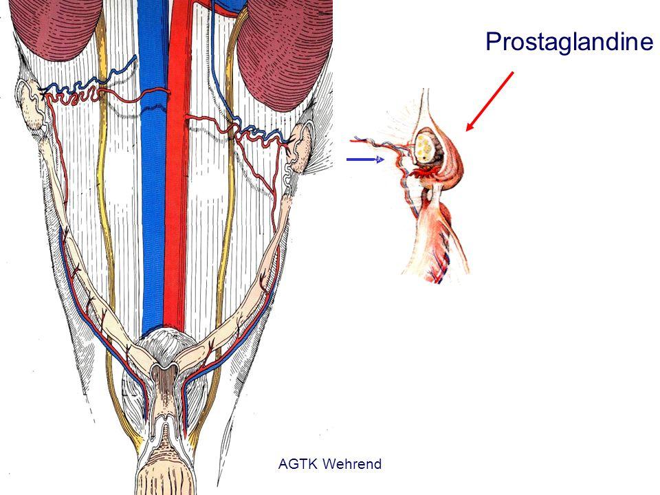 Prostaglandine AGTK Wehrend
