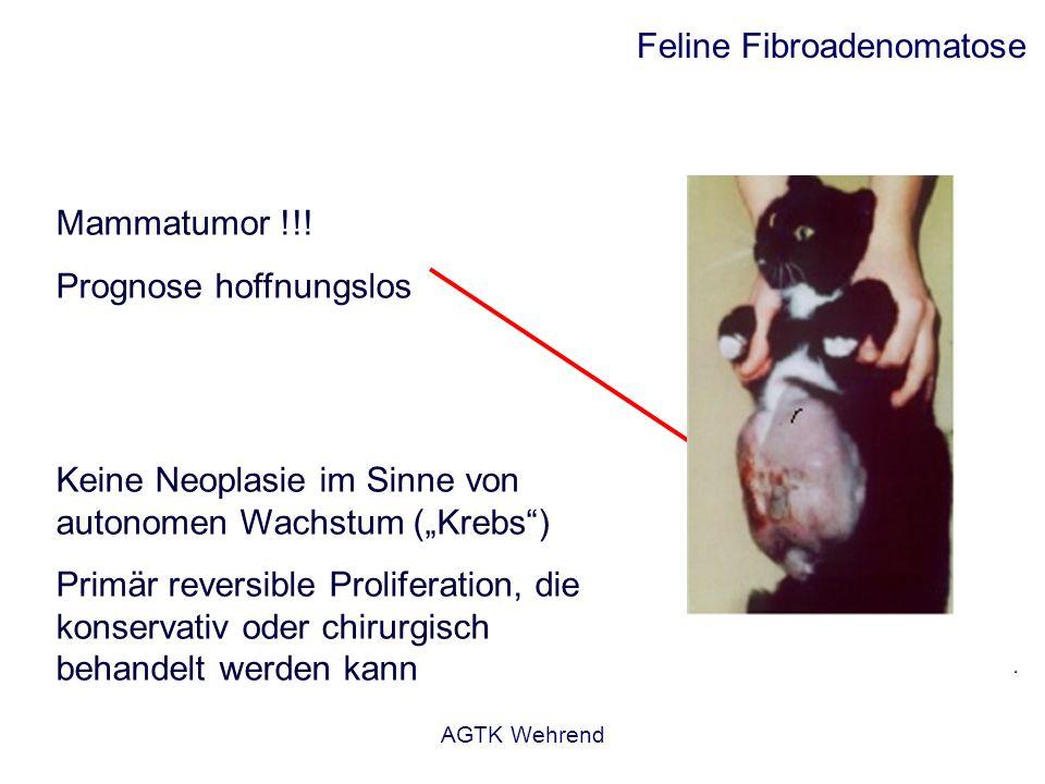 Feline Fibroadenomatose
