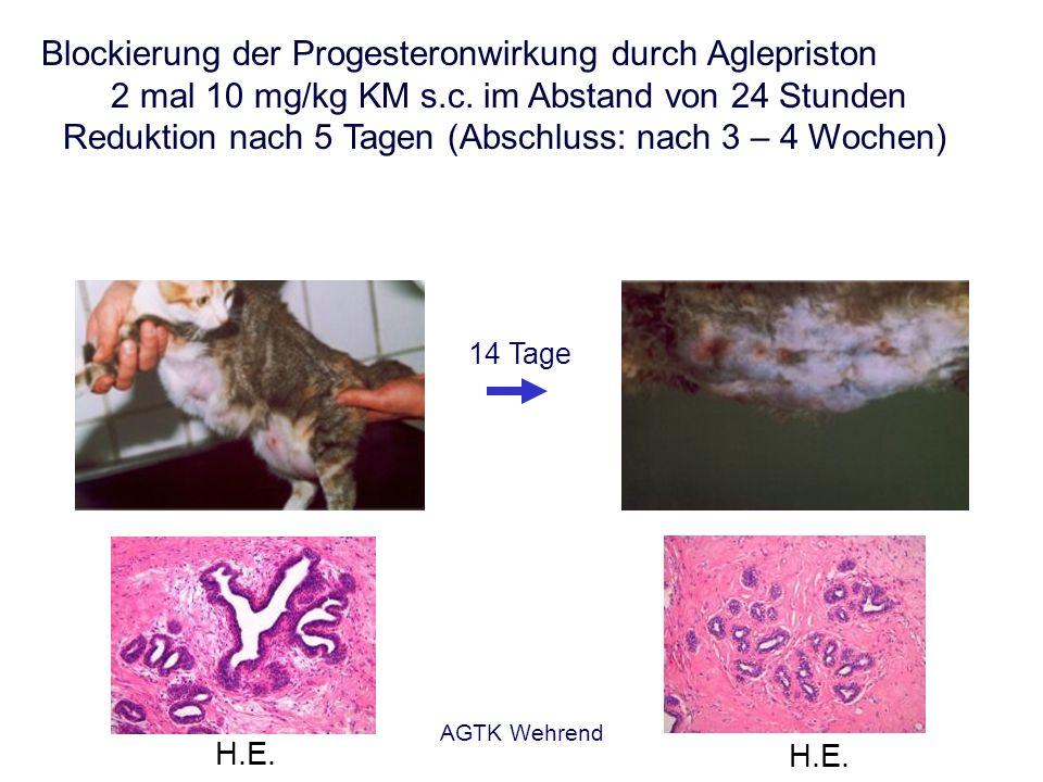 Blockierung der Progesteronwirkung durch Aglepriston