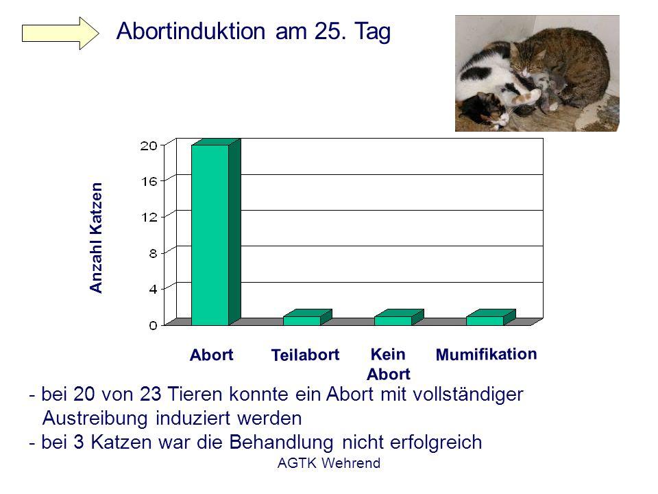 Abortinduktion am 25. Tag Anzahl Katzen. Abort. Teilabort. Kein Abort. Mumifikation.