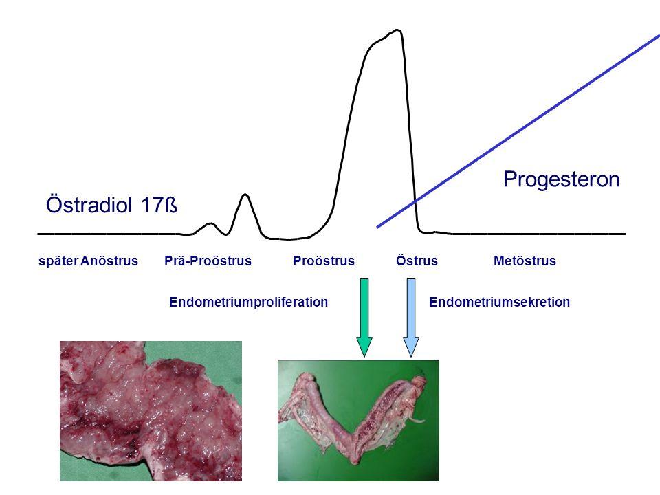 Progesteron Östradiol 17ß AGTK Wehrend