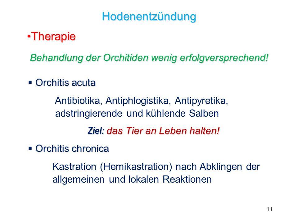Behandlung der Orchitiden wenig erfolgversprechend!