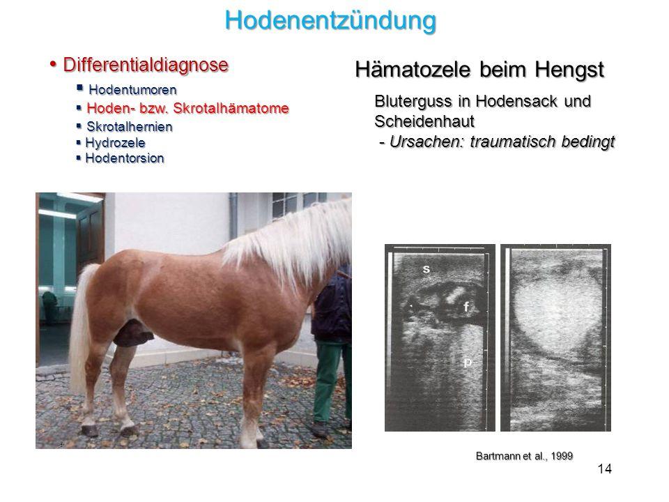 Hodenentzündung Differentialdiagnose Hämatozele beim Hengst