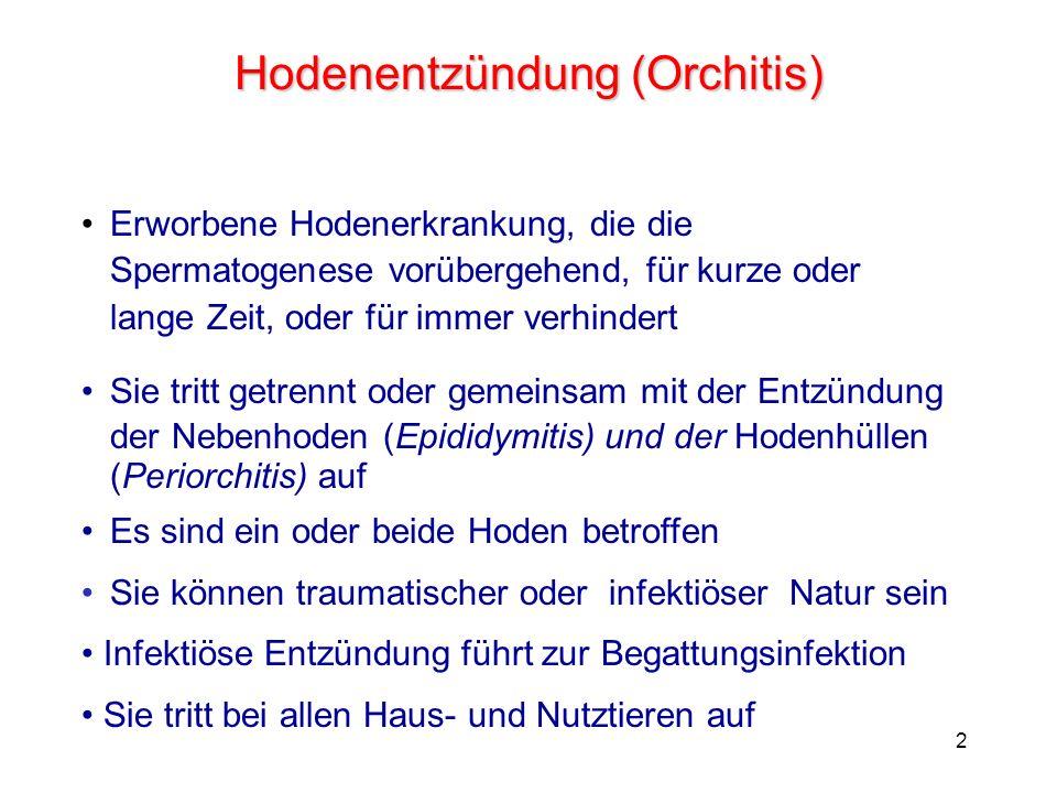 Hodenentzündung (Orchitis)