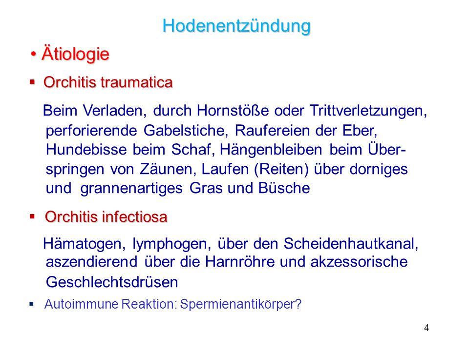 Hodenentzündung Ätiologie Orchitis traumatica