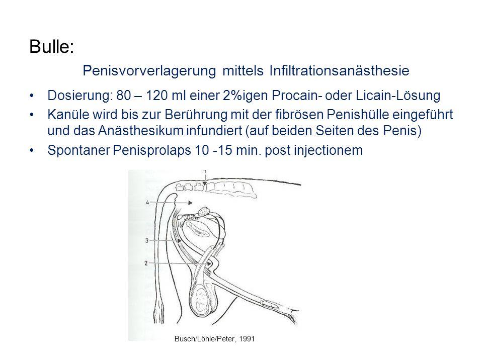 Bulle: Penisvorverlagerung mittels Infiltrationsanästhesie