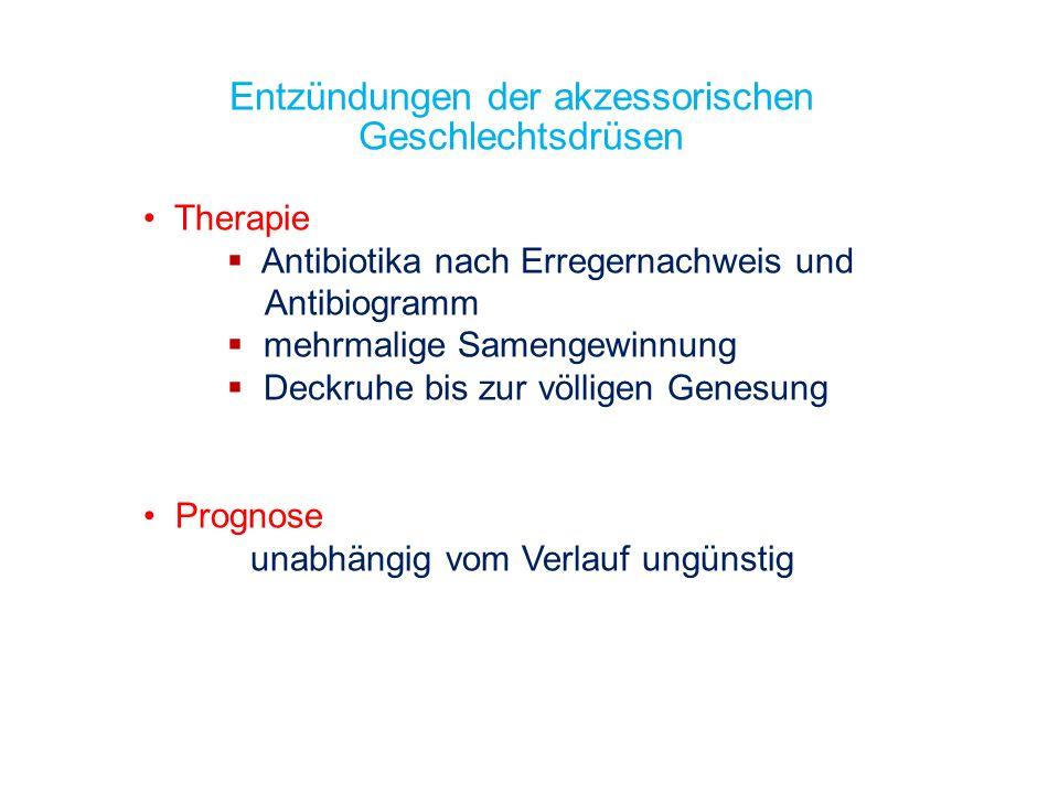 Entzündungen der akzessorischen Geschlechtsdrüsen