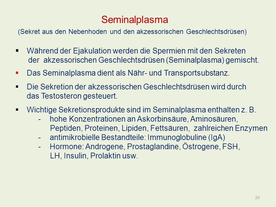 Seminalplasma (Sekret aus den Nebenhoden und den akzessorischen Geschlechtsdrüsen) Während der Ejakulation werden die Spermien mit den Sekreten.