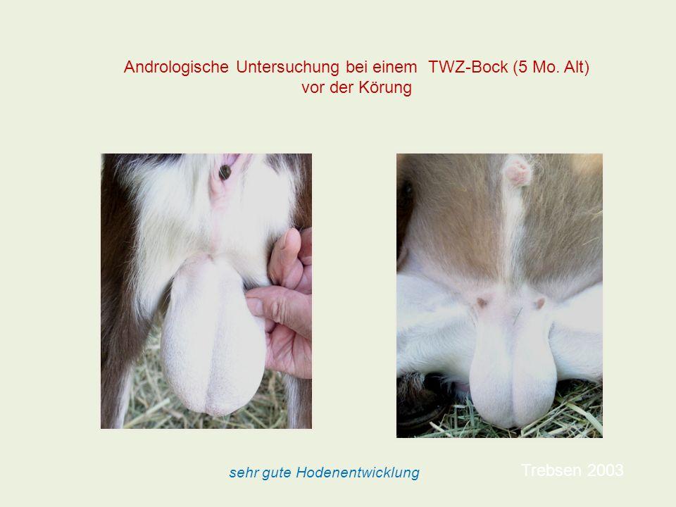 Andrologische Untersuchung bei einem TWZ-Bock (5 Mo